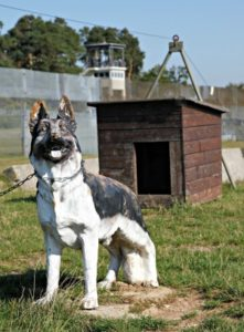 Wachhund an der Mauer - Nachbildung von gudog